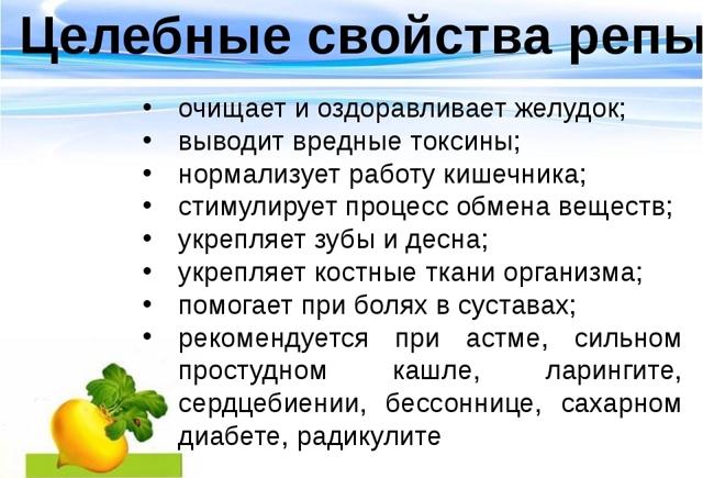 Ріпа: користь і шкода для здоров'я, рецепти приготування з фото