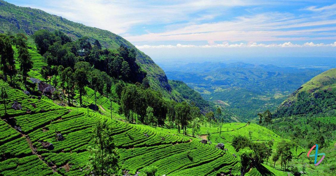 Путешествие по Шри-Ланке на автомобиле: фото природы острова в Индийском океане