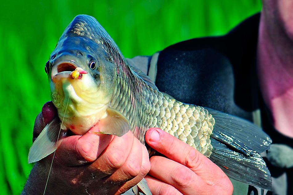 Хороший улов карася как следствие качественной подготовки к рыбалке